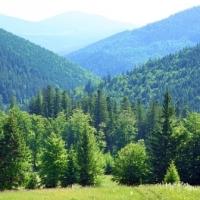 Oláj mancsok magyar erdőkön – természetesen jogtalanul