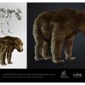 3D-s jégkorszaki barlangi medve a Móra-múzeum megújult kiállításán