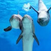 Fegyveres és felderítő delfineket képez ki az ukrán haditengerészet