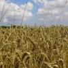 Földvédelmi munkacsoportot hozott létre a Csongrád Megyei Közgyűlés