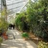 Bemutatták a szegedi füvészkert új üvegházát