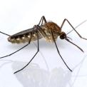 Áprilisi zöld árral a szúnyogártalom ellen