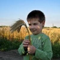 Rozsbúza élelmezési kutatás indult Szegeden
