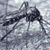 Biológiai szúnyoggyérítés Szegeden