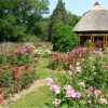 Csaknem százharminc rózsafajta virágzik a szegedi füvészkertben