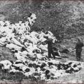 Délvidéki Magyar Holokauszt – kártérítés helyett balkáni kendőzés?
