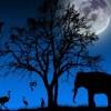 Újra Állatkertek éjszakája augusztusban