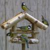 Kertjeink téli madárvendégei és tavaszi madárvédelmi teendők