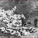 Délvidéki Magyar Holokauszt – HELYSÉGJEGYZÉK – koncentrációs táborok, kínzások, tömeggyilkosságok