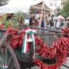 Paprikafesztivál és fröccs-programok Szegeden