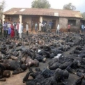 Holokauszt Nigériában – katolikusok százait égették el elevenen muzulmánok, akiket menekültekként ajnároznak Európában