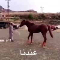 Még a lovak is tudnak különbséget tenni!