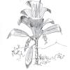 Virágvasárnap – Pálmavasárnap
